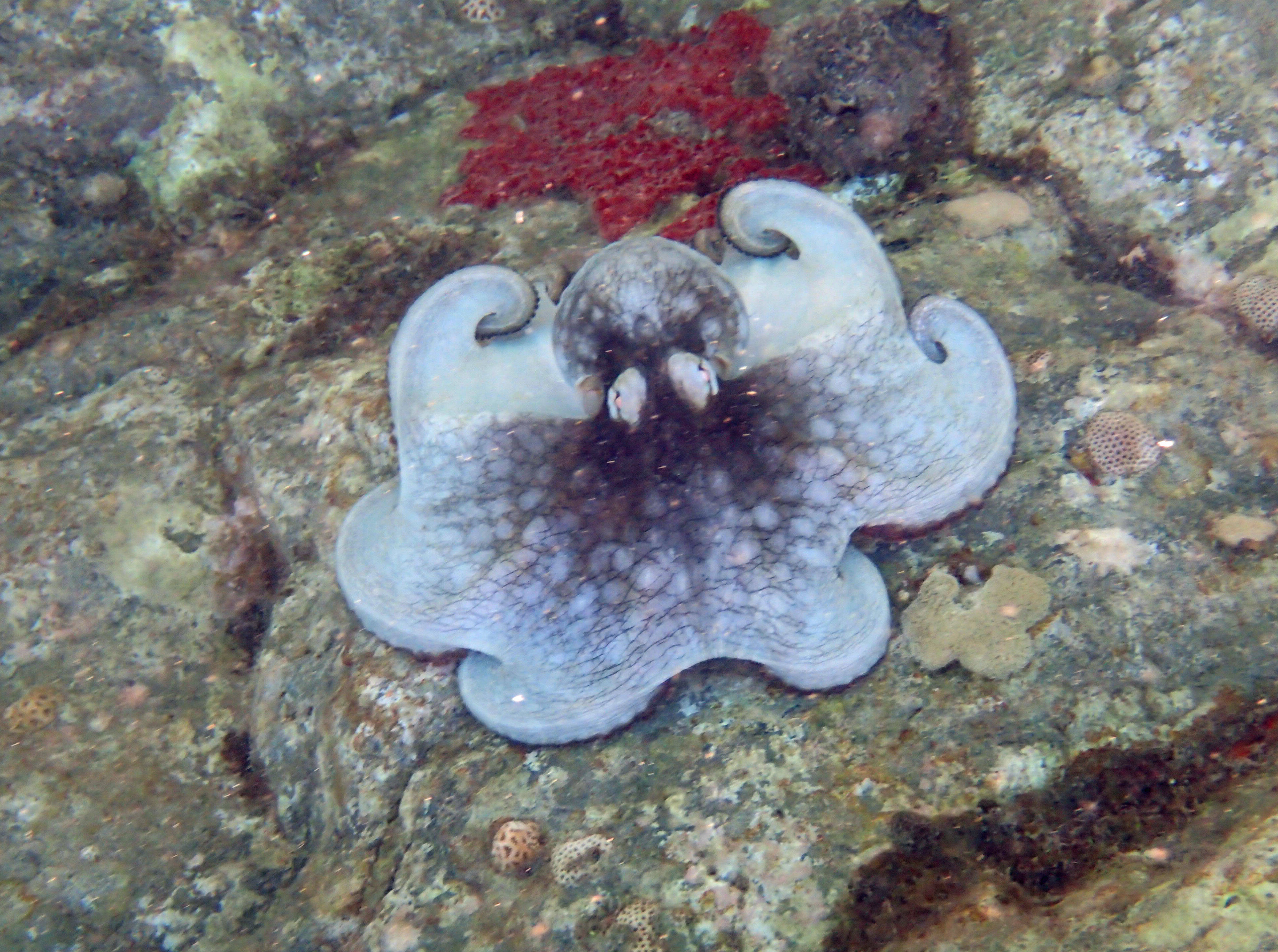 Octopus 110 - Little Bay.jpg